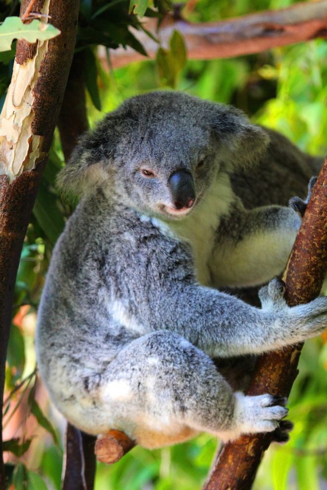 152 Australia Zoo 5 copy