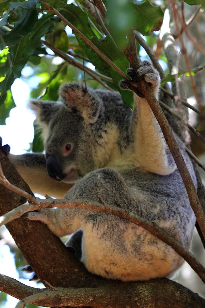 156 Australia Zoo 9 copy