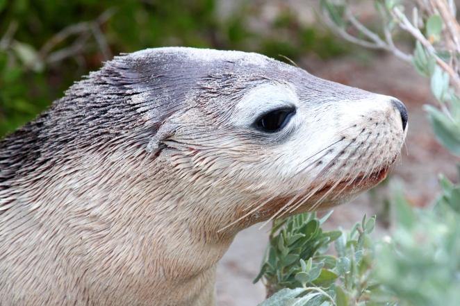 38 Kangaroo Island 2
