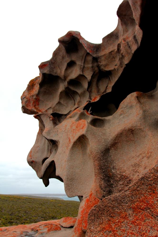 48 Kangaroo Island 11