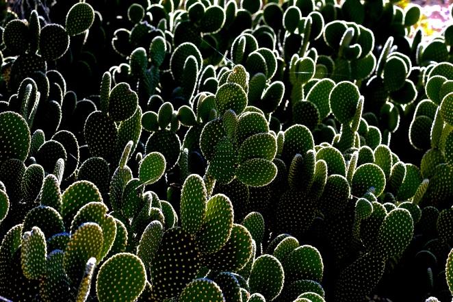 Cactus 002