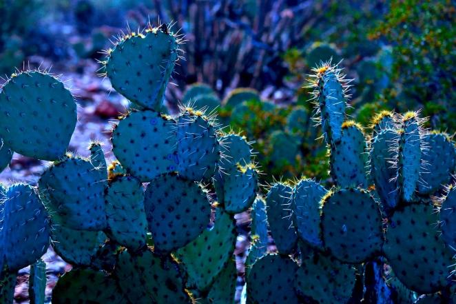 Cactus 008