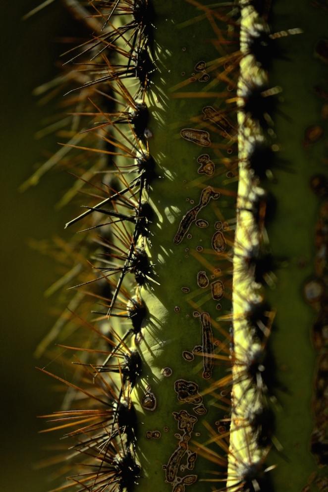 Cactus 010