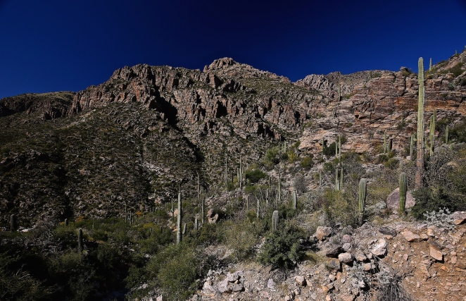 Sabino Canyon 001
