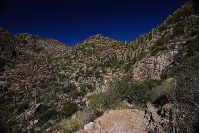 Sabino Canyon 002