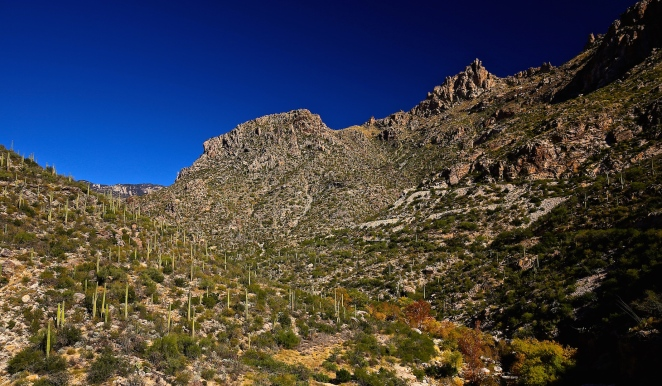 Sabino Canyon 004