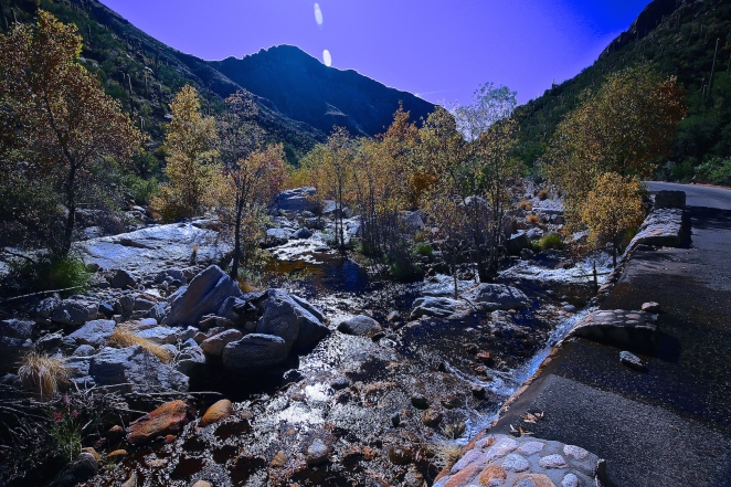 Sabino Canyon 013