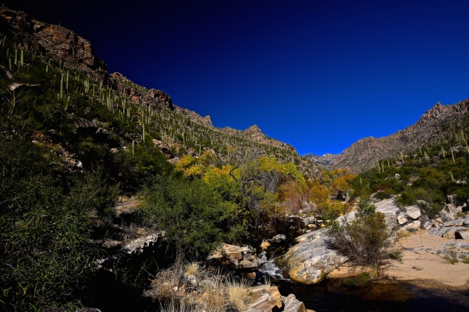 Sabino Canyon 015