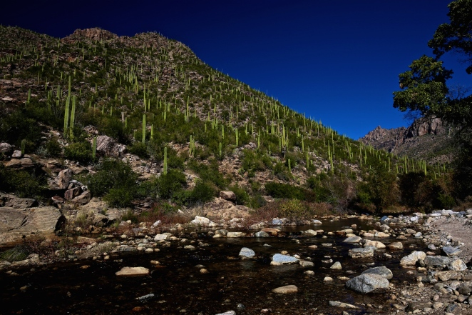 Sabino Canyon 019