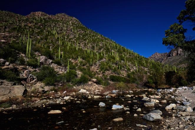 Sabino Canyon 019