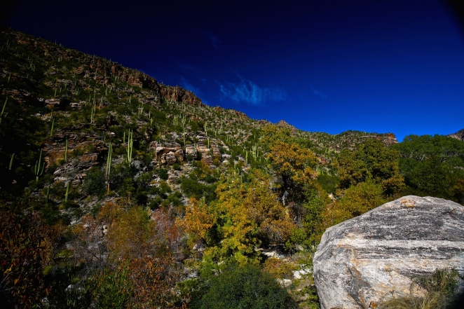 Sabino Canyon 021