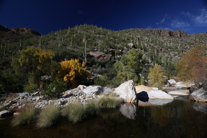 Sabino Canyon 022