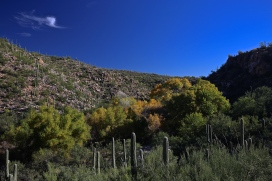 Sabino Canyon 026