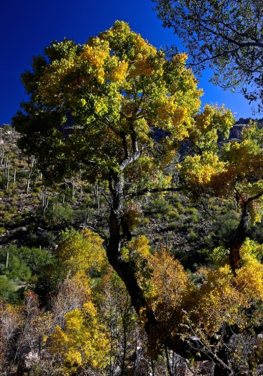 Sabino Canyon 027