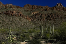 Sabino Canyon 029