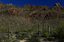 Sabino Canyon 029