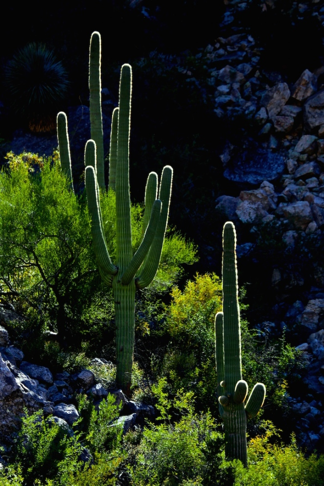 Sabino Canyon 031