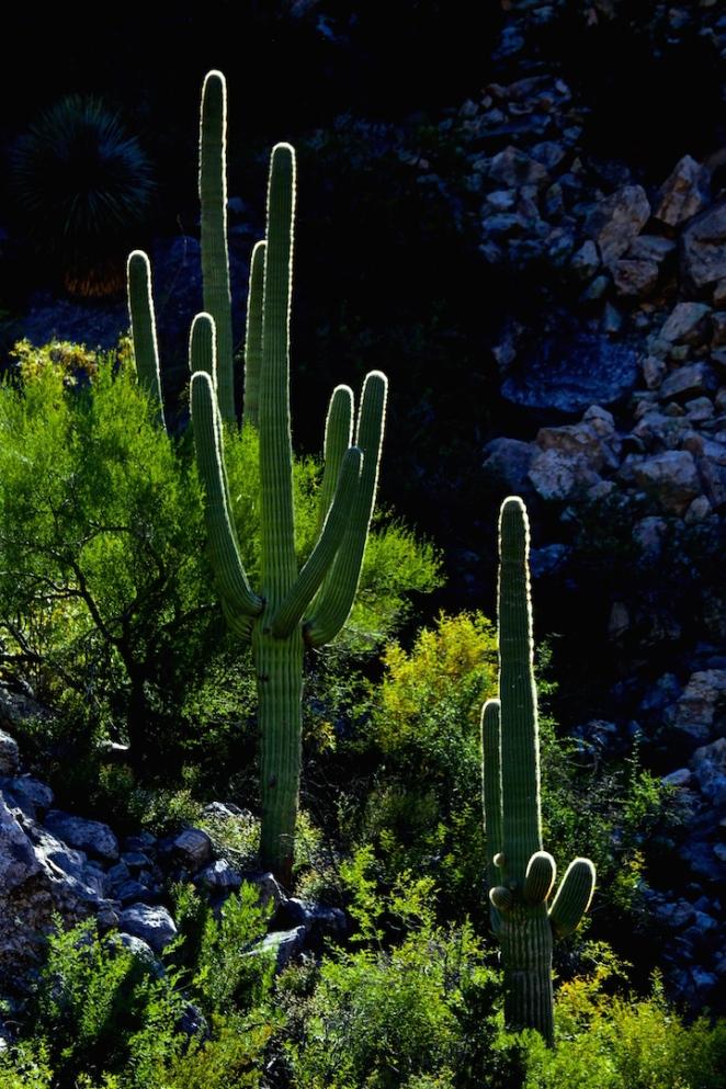 Sabino Canyon 031