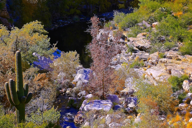 Sabino Canyon 033