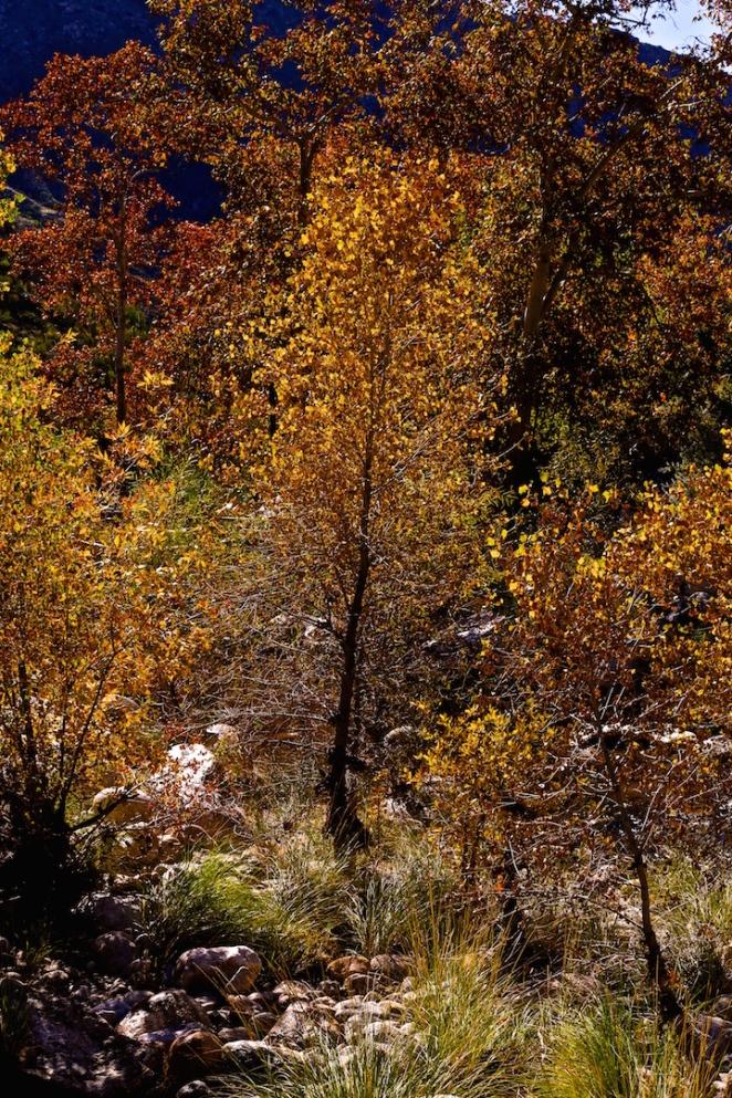 Sabino Canyon 034