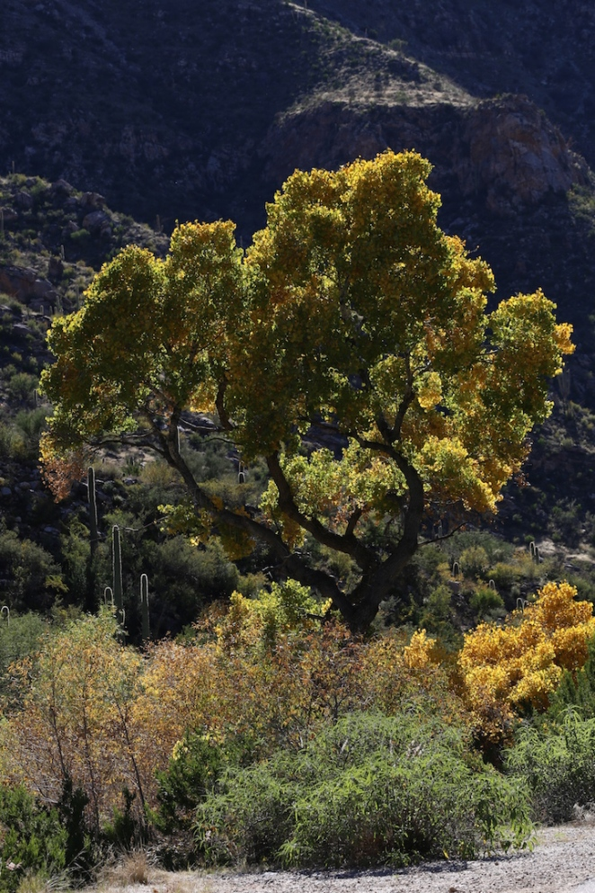 Sabino Canyon 037