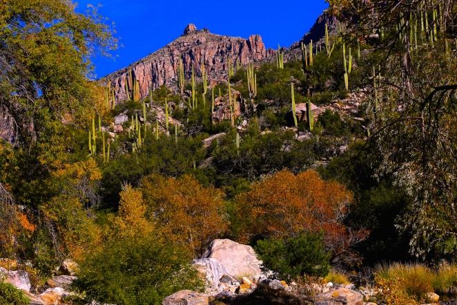 Sabino Canyon 040
