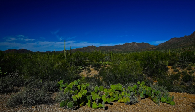Tucson Mountain Park 001