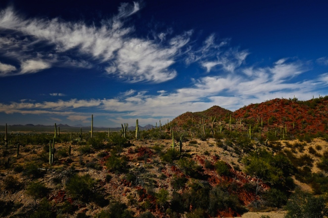 Tucson Mountain Park 003