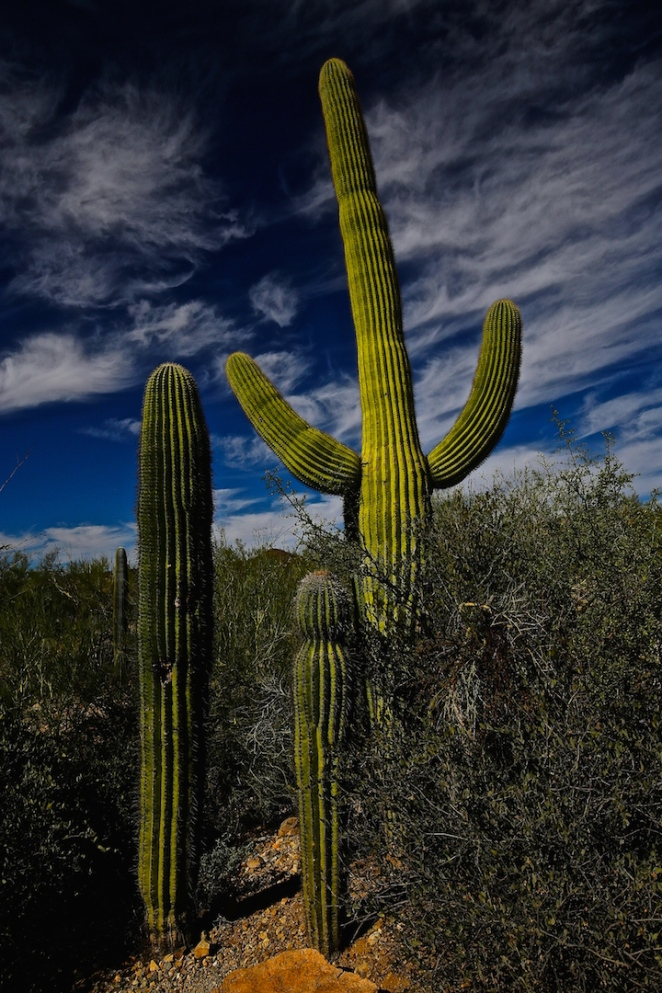 Tucson Mountain Park 004