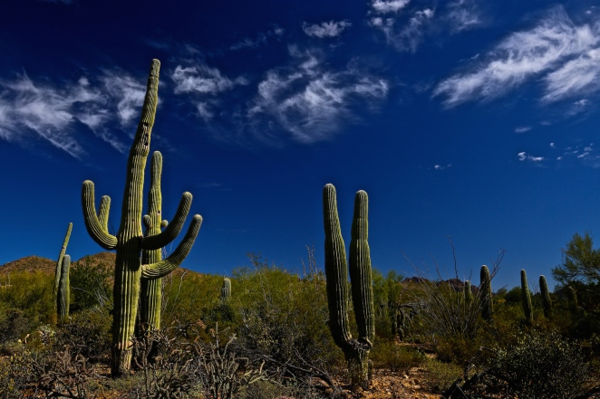 Tucson Mountain Park 005