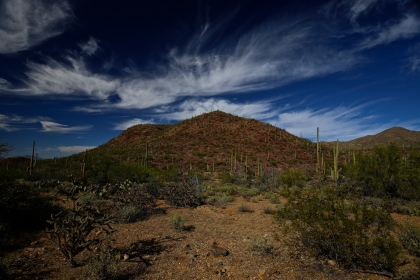 Tucson Mountain Park 006