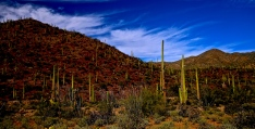 Tucson Mountain Park 007