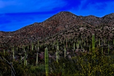 Tucson Mountain Park 008