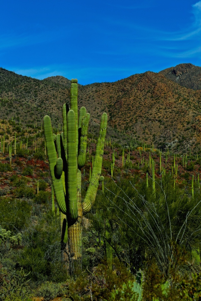 Tucson Mountain Park 010
