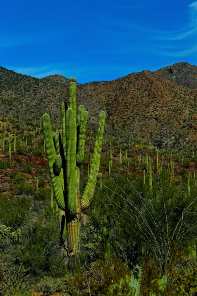 Tucson Mountain Park 010