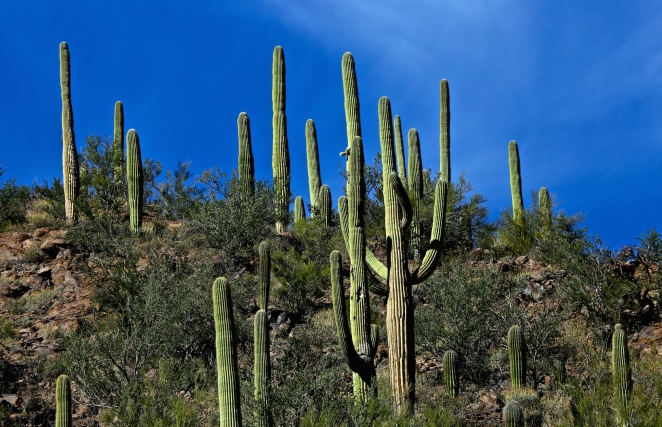 Tucson Mountain Park 011