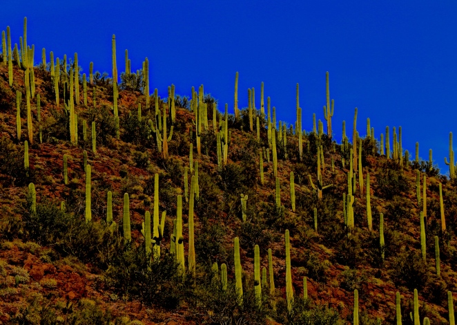 Tucson Mountain Park 013
