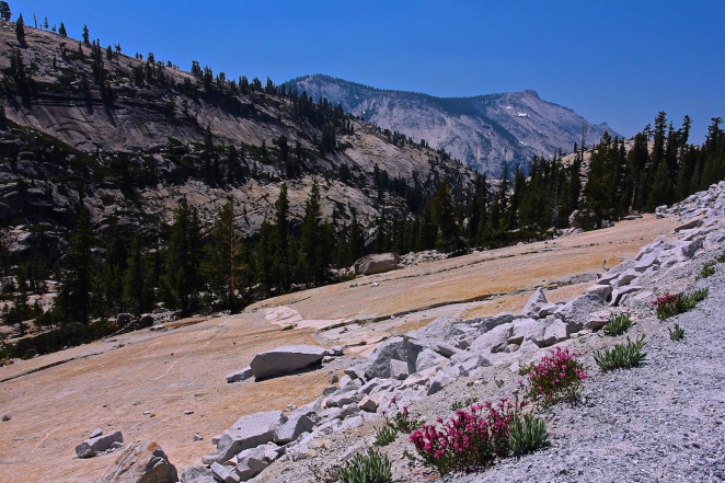 Yosemite 005