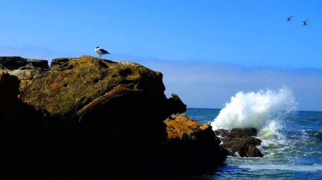 Coast 0017 Blog